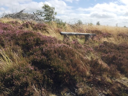 This bench near the summit is the nearest thing to an identifiable summit marker