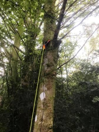 Using a tree rather than a pole to support the linked dipole